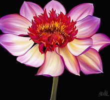 Fiery Pink Dahlia by Laura Bell