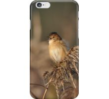 The Golden-headed cisticola iPhone Case/Skin