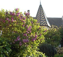 Lilac trees in Beaune by samandoliver