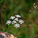 Wildflower by WeeZie
