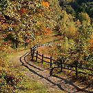 Broken Fence Rail beside a Path by SummerJade