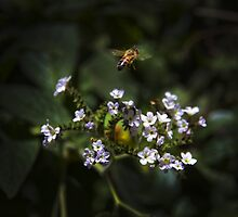 A Bee See Flowers by Al Bourassa