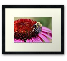 Busy Bumble Guy Framed Print