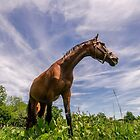 A Horse of Course by DESY photowerks
