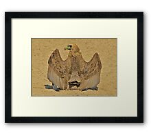 Bateleur Eagle - Wings of Beauty from Africa Framed Print