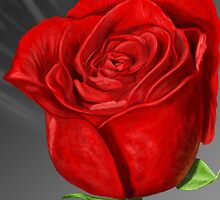 Rose Ray by Brandon Isaacks