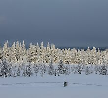 Winter by UpNorthPhoto