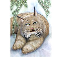 """""""LINUS""""  Canadian Lynx, First Snow Photographic Print"""