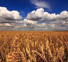 Golden Harvest by Paul Bettison