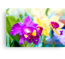 Close up shot on colorful Cattleya Orchids Canvas Print