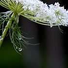 Queenly Drops by WildThingPhotos