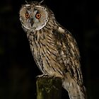 Long Eared Owl (Asio otus) -VII by Peter Wiggerman