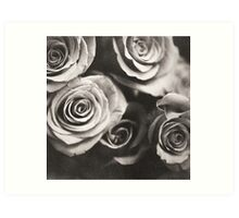 Medium format analog black and white photo of white rose flowers Art Print