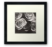 Medium format analog black and white photo of white rose flowers Framed Print