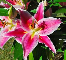 Oriental Lily by Penny Smith