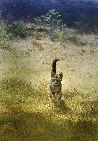 Run, kitten, run! by Lynn Starner