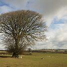 Lone tree in rural Devon by peteton