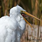Big Smile from the Great Egret Canberra Australia by Kym Bradley