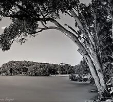 Gum Trees at Red Rock by wallarooimages