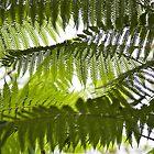 Fern leaves by prante