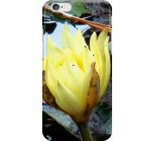Yellow Water Lily iPhone Case/Skin
