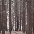 Pine Forest by prante