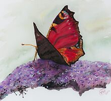 Butterfly by Tricia Winwood