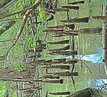 """Cypress knee's"" by PhotoGumbo"