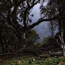 Mount Ainslee in the Fog (4) by Wolf Sverak