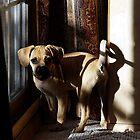Puggle Dog Portrait by Oldetimemercan