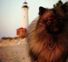 Kyrie the Keeshond by krable