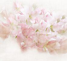 Lathyrus Dream in Pink by MaureenAstrid