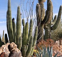 Saguaros and Such by Gordon  Beck