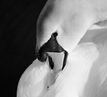 Restful Mono by Carol Bleasdale