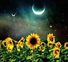 Sunflowers In The Moon by odog5960