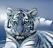 Blue Maltese Tiger and Snow by Erika Kaisersot