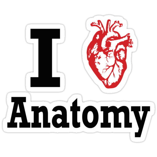 I heart Anatomy by Brantoe