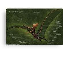 Male Pteranodon Sternbergi Skeleton Canvas Print