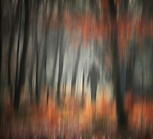Transience by Ursula Rodgers Photography
