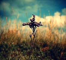 Sea Lavender by Katherine Womack