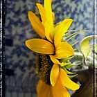 Sunflower in the sunlight by KSKphotography