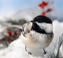 Chilly Chickadee by Christina Rollo