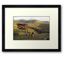 Indy on Dinas Framed Print