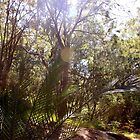 Magic Australian Bush  by Fledermaus