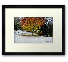 Beech Tree~ Caught in a Snow Flurry Framed Print