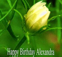 Your Card has been delivered Alexandra by lynn carter