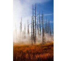 Tree Skeletons, Yellowstone National Park, USA. Photographic Print