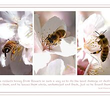 The Bee Collects by Lisa Torma