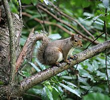 squirrel on the tree by spetenfia