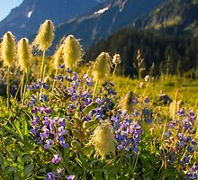 Flowers and Mountains by lkamansky